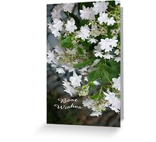Love, Lace (Hydrangea White Lacecap) Congratulations! Greeting Card