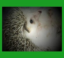 hedgehog curled in a ball by Rebecca York