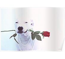 Dog with Rose Poster