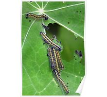 Invasion Of The Caterpillars......... Poster