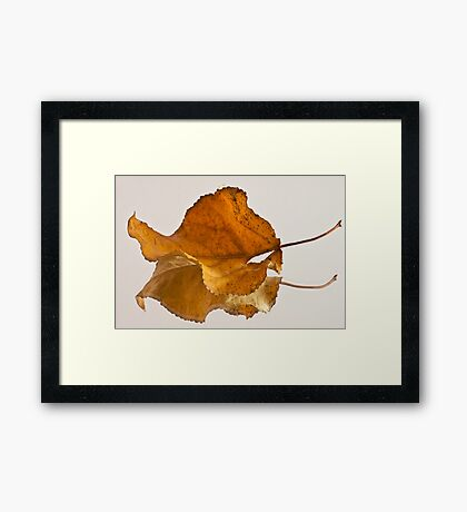 Seeing Double Autumn Leaf  Framed Print