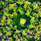 Plentiful Pansies by mrthink