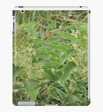 Primrose or Zizotes or Longhorn Milkweed iPad Case/Skin