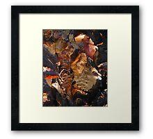 Natural Canvas Framed Print