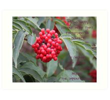 Elderberry Blossom With Quote Art Print