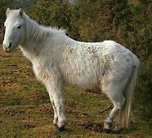Forest Pony by RedHillDigital
