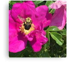 Bumble Bee & Wild Rose Canvas Print