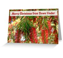 Red Bottlebrush Western Australia Greeting Card