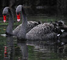 Swan Lake by Peter Kurdulija