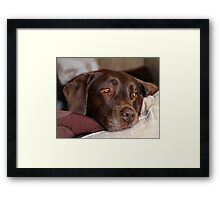 Roy Daydreaming Framed Print