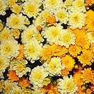 Fall Mums Pillow by AuntDot