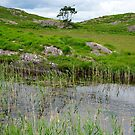 river reeds and lake on the kerry way by morrbyte
