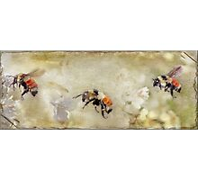 Dance Of The Bumble Bees Photographic Print