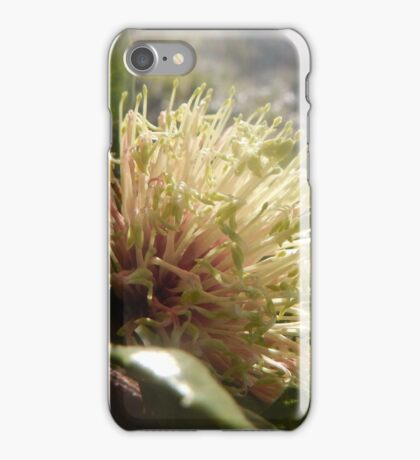 Banksia ilicifolia - Holly-leaved banksia iPhone Case/Skin