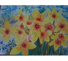 Daffodils herald the spring Photographic Print
