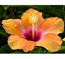 Orange hibiscus and dew drops Photographic Print