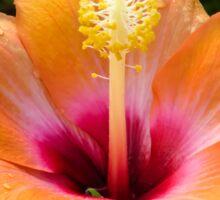 Orange hibiscus and dew drops Sticker