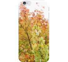 A Wash Of Yellow Maples iPhone Case/Skin