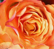 The Sleeping Beauty Awakens - Dreamy Orange Rose Sticker