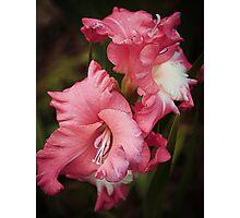 A Blush Of Colour Photographic Print
