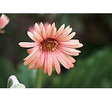Touch Me Softly Photographic Print