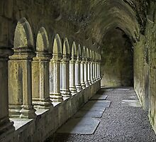 Cloisters at Quin by TonyCrehan