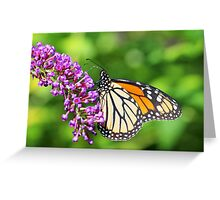 Monarch Butterfly - Danaus plexippus - Female Greeting Card