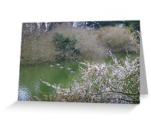 Ducks on the Lake Greeting Card