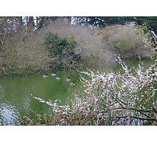 Ducks on the Lake Photographic Print