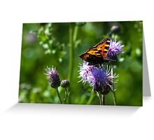 Flutter by, butterfly Greeting Card