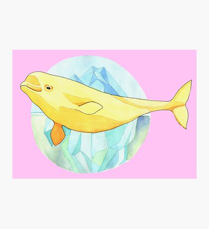 Beautiful Beluga Photographic Print