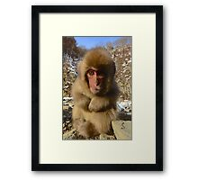A young snow monkey, Japan Framed Print