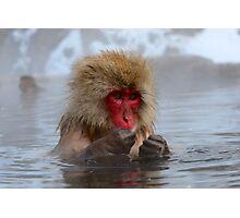 Snow monkey Japan Photographic Print