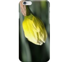 About to Stretch - Daffodil Bud iPhone Case/Skin