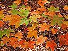 Orange Leaves by Evelyn Laeschke