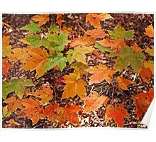 Orange Leaves Poster