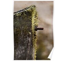 Moss on Fence Post Poster