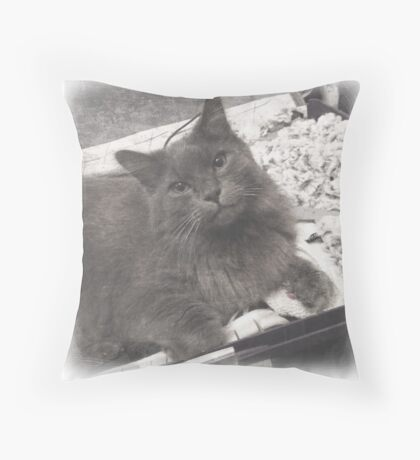 Fluffy Cat in Suitcase Throw Pillow