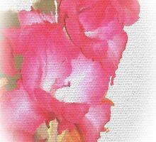 pink gladiola by OlaG
