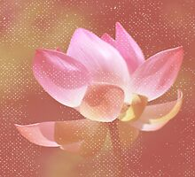 Pink Lotus Flower by tropicalsamuelv