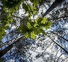Greenery by Bokeh  Photography