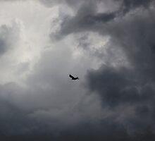 Buzzard flying in stormy sky by turniptowers