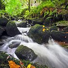 Early Autumnal Brook by Andrew Hocking