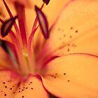 Lily by lightwanderer