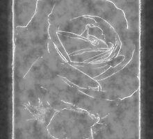 Pink Roses in Anzures 2 Outlined Gray by Christopher Johnson