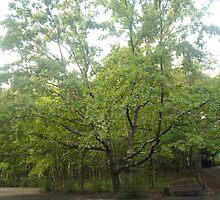 red Oak  by Tatyana Penkova