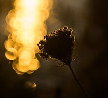 Luminous Seed Shine by Georgia Mizuleva