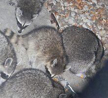 Heads DOWN, KITS!, CAMERA! by Navigator