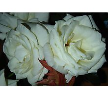Olde Roses Photographic Print
