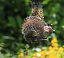 Sleepy squirrel by turniptowers